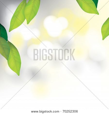 Spa Background with Leafs