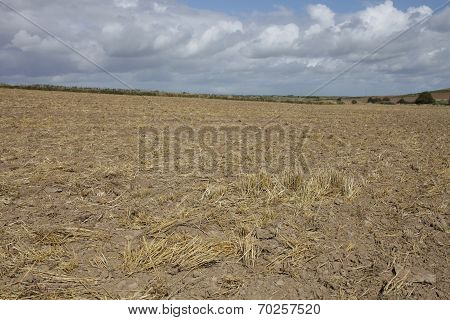Harvested Wheat Field.