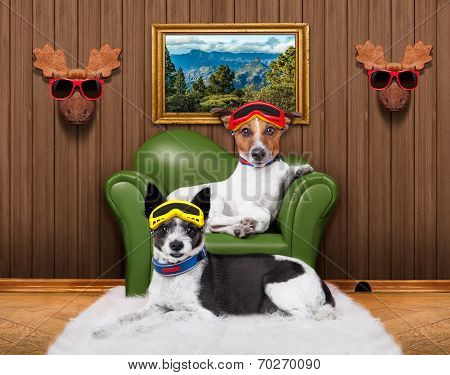 Love Couple Sofa Dogs