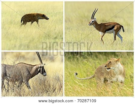 African Savannah Mammals In Their Natural Habitat
