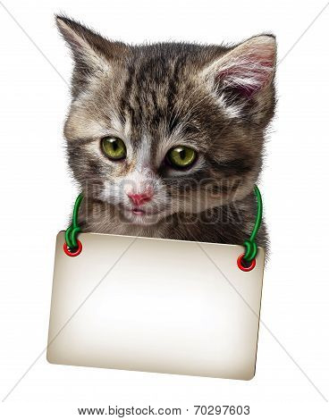 Cat Kitten Blank Card