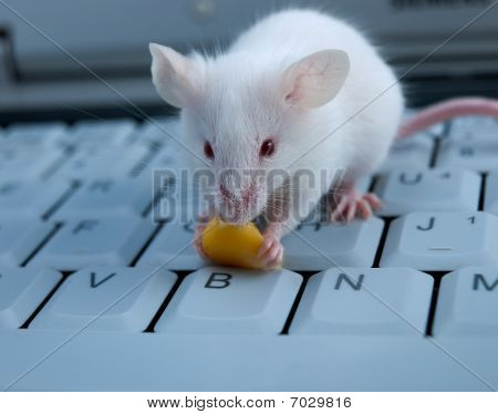 Mouse on a keyboard