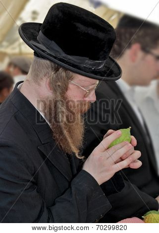 JERUSALEM, ISRAEL - SEPTEMBER 18, 2013: Traditional market before the holiday of Sukkot. Religious Jew with red beard, glasses and hat inspects ritual citrus