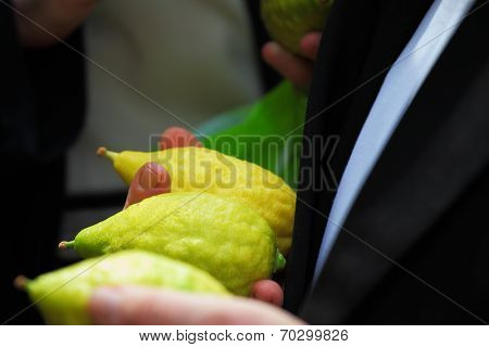 BNEI- BRAK, ISRAEL - SEPTEMBER 22, 2010: Religious Jew chooses ritual plant - citron - in the market on the eve of Sukkot