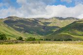 picture of dungeon  - Daisy field with mountains blue sky and clouds scenic Langdale Valley Lake District Cumbria near Old Dungeon Ghyll England UK in summer - JPG