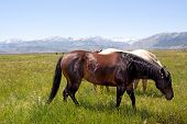 stock photo of open grazing area  - Horses grazing on an open field in rural area - JPG