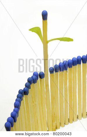 Growing Matchstick