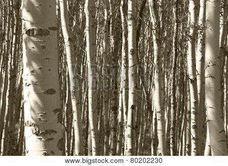 Forest Detail In Jasper. Alberta. Canada