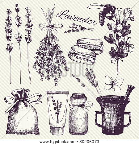 lavender flowers sketch