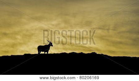 Eland At Dawn