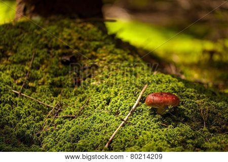 Mushroom. closeup