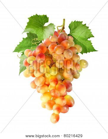 Yellow Red Grapes Bunch Vertical Isolated On White