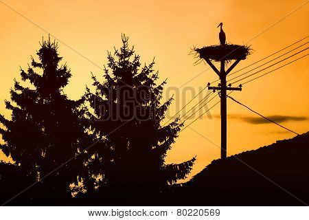 Stork Standing In Nest At Sunset