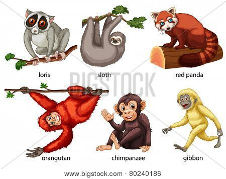 Illustration of different kind of animals