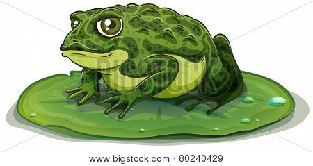 Illustration of a close up frog