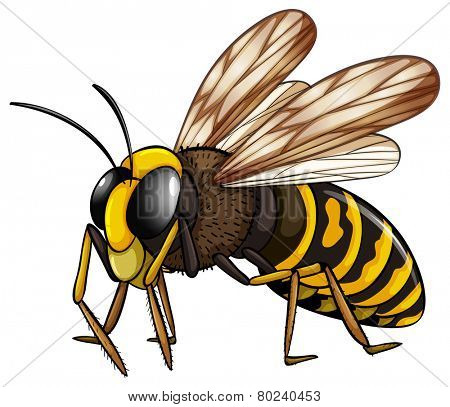 Illustration of a close up wasp