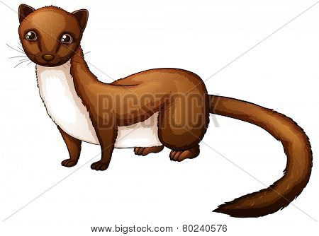 Illustration of a close up weasel