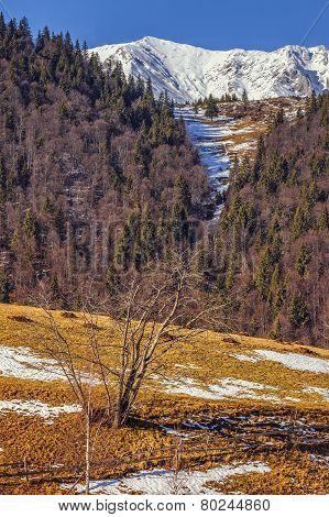 Piatra Craiului Natural Reserve, Romania