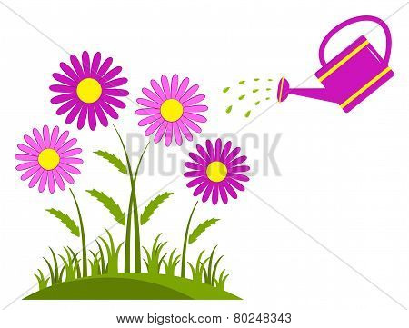 Pink Daisies And Watering Can