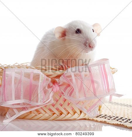 White Rat In A Basket With A Pink Bow.