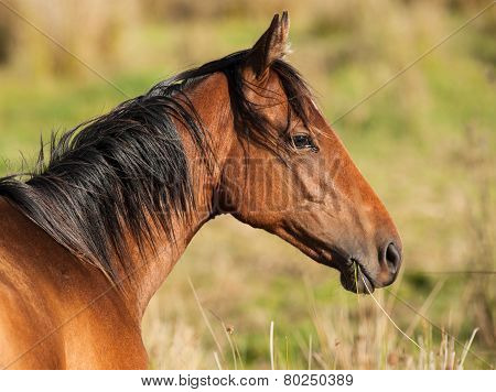 horse eating grass in a field