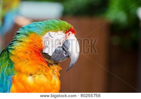 Sleepy parrot