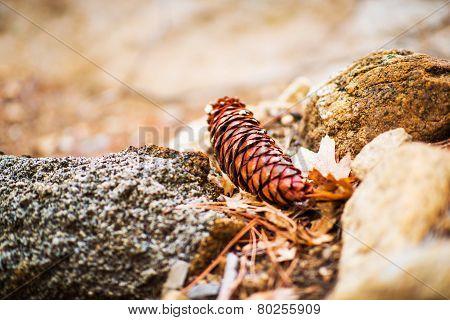 Fallen Cone Closeup