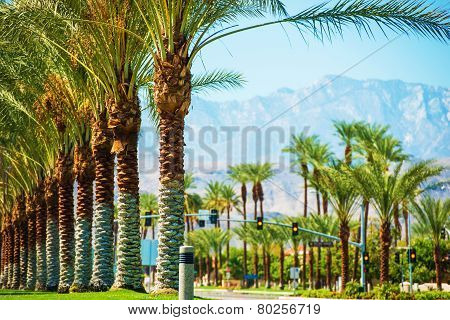 Palms Road Coachella Valley