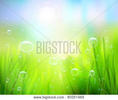 Grass with water drops. Vector illustration.