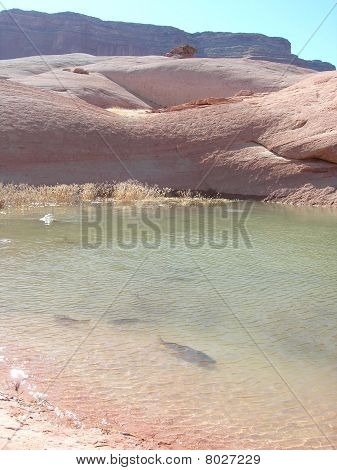Lake Powell fish