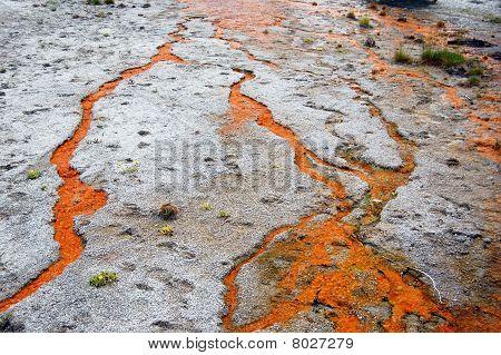Orange Bacteria Flow