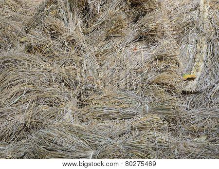Rice Straw Background