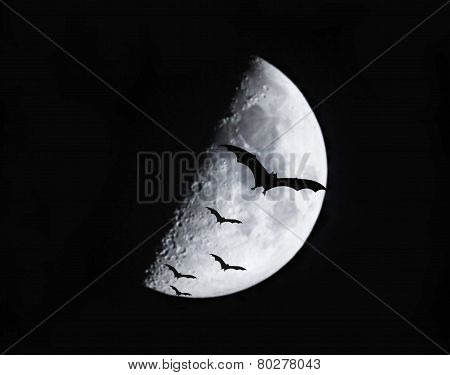 Black Bats Flying In The Sky At Night. A Blurred Background Moon