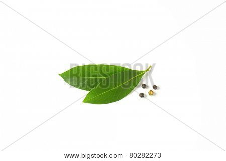 fresh bay leaves and peppercorns on white background