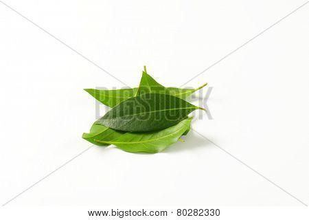 handful of fresh bay leaves on white background
