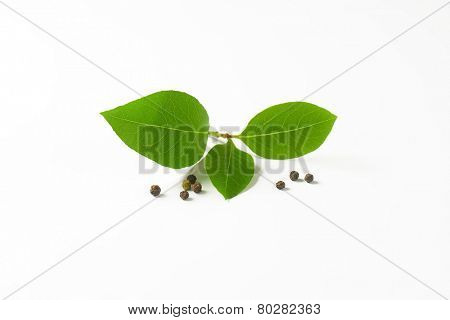 twig o fresh bay leaves and peppercorns on white background