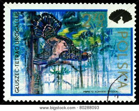 Vintage  Postage Stamp. Capercaillie.