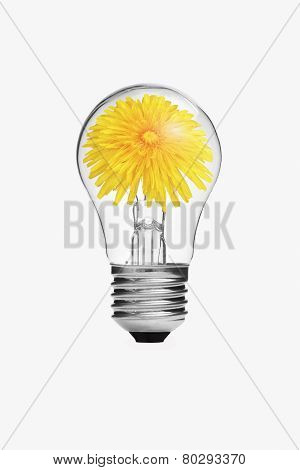 Yellow Flower Inside The Light Bulb