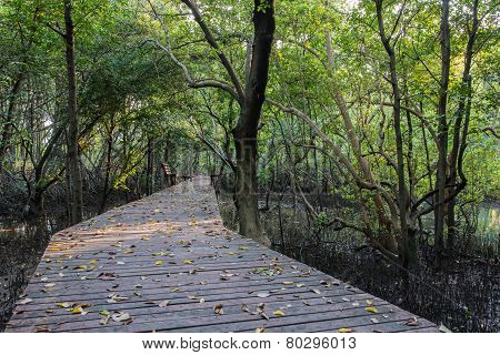 The Forest Mangrove