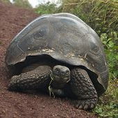 picture of tortoise  - The Gal - JPG