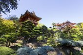 picture of vegetation  - vegetation and trees in a japanese garden - JPG