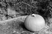 stock photo of lichenes  - Pumpkin on lichen-covered stone bench in front of cotoneaster - monochrome processing ** Note: Soft Focus at 100%, best at smaller sizes - JPG