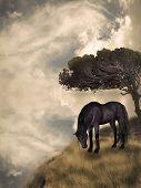picture of black horse  - Black horse in a fantasy field landscape art and illustration - JPG