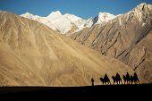 picture of karakoram  - silhouette of caravan travellers riding camels Nubra Valley Ladakh  - JPG