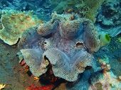 foto of enormous  - The surprising underwater world of the Bali basin - JPG
