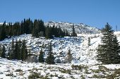 stock photo of conifers  - Snowy mountain rock ridge with forest of conifers in sunny winter day - JPG