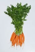 picture of root-crops  - Whole root collar on a white background - JPG