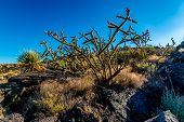 stock photo of valley fire  - Valley of Fire Lava Field in New Mexico with Interesting Flow Stone Lava Rocks and Cactus with Other Desert Plants