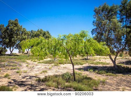Eshkol National Park, Small Oasis In The Negev Desert, Israel