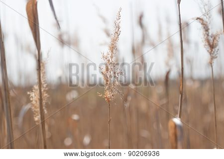 Spikelet Background